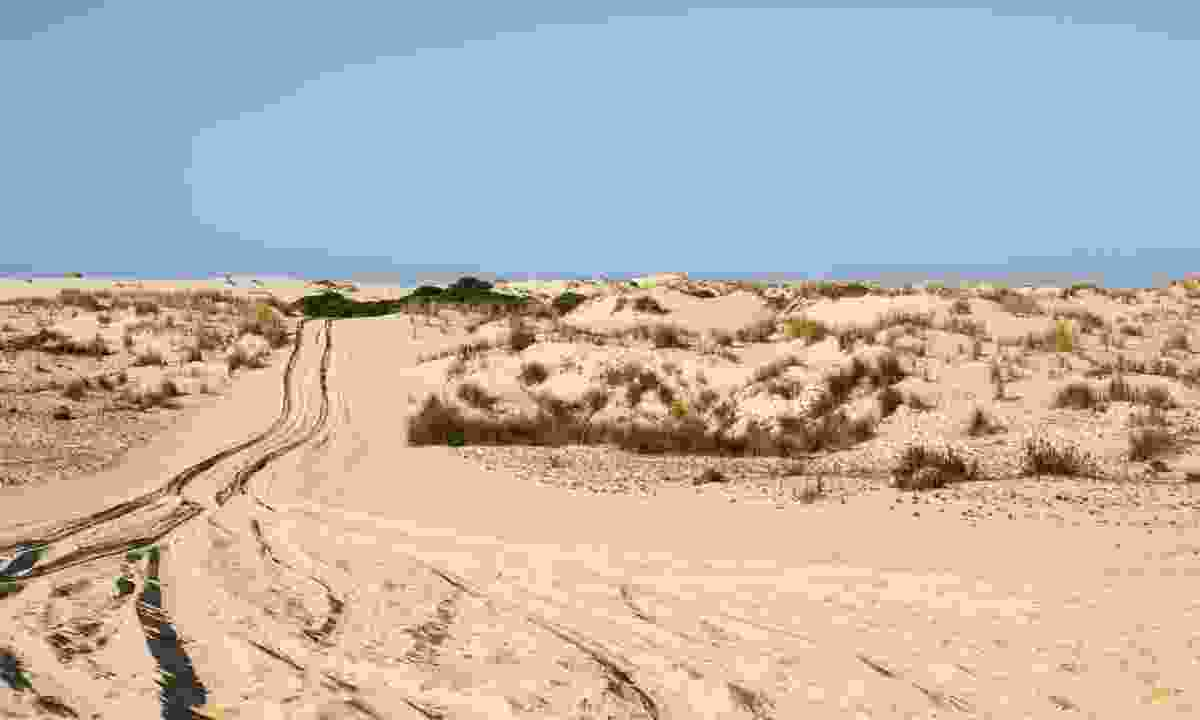 Dunes of Donana National Park (Dreamstime)