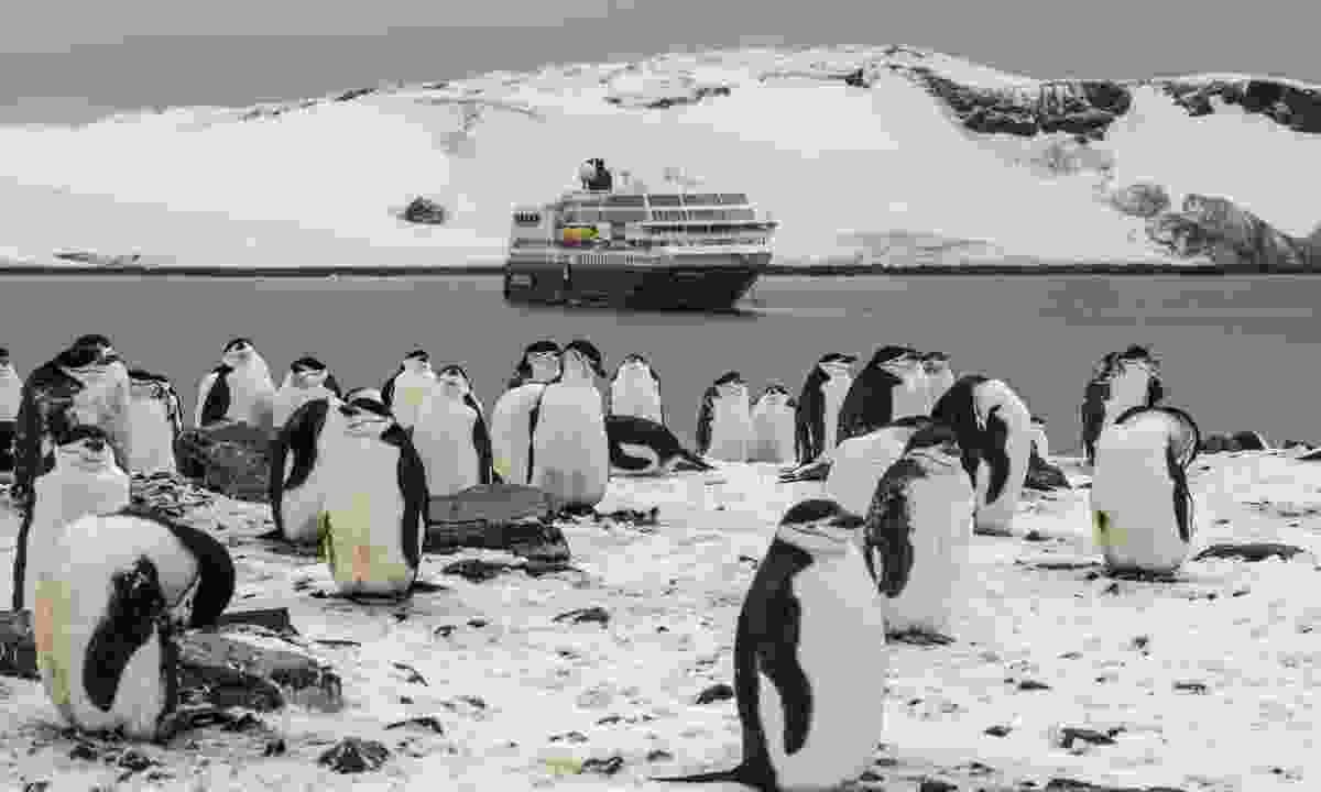 Half Moon Island, Antarctica (Wildfoot)