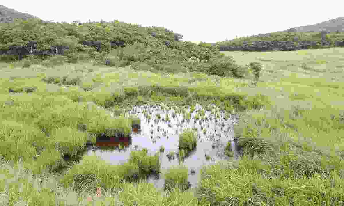 Gangwon Eco-Peace Biosphere Reserve, South Korea (© UNESCO/Gangwon Eco Peace Biosphere Reserve)