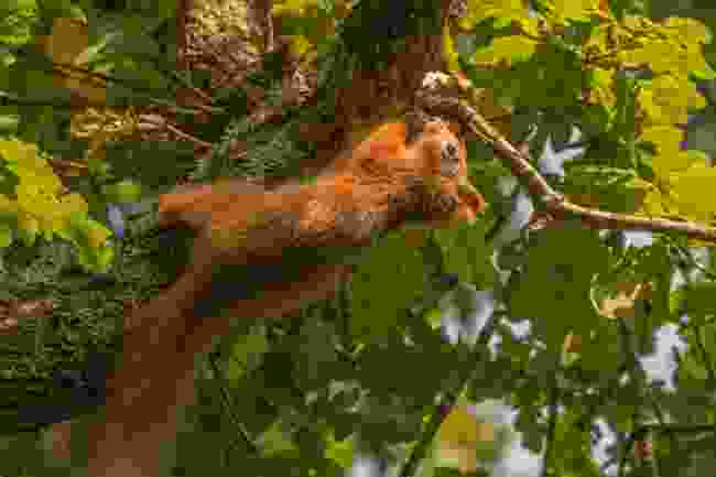 A red squirrel in Fort Victoria Nature Reserve (Shutterstock)