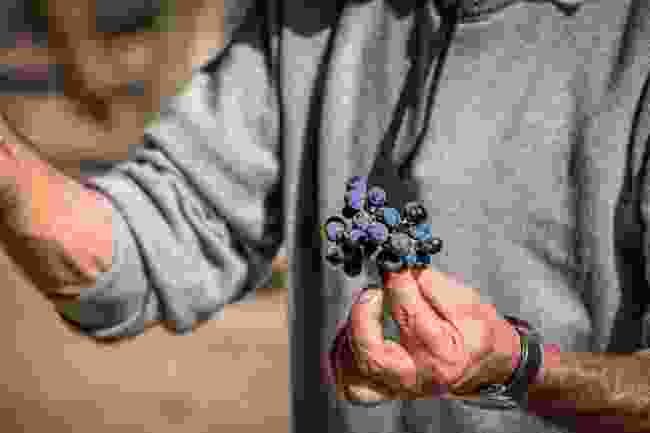 Join in with the grape harvest