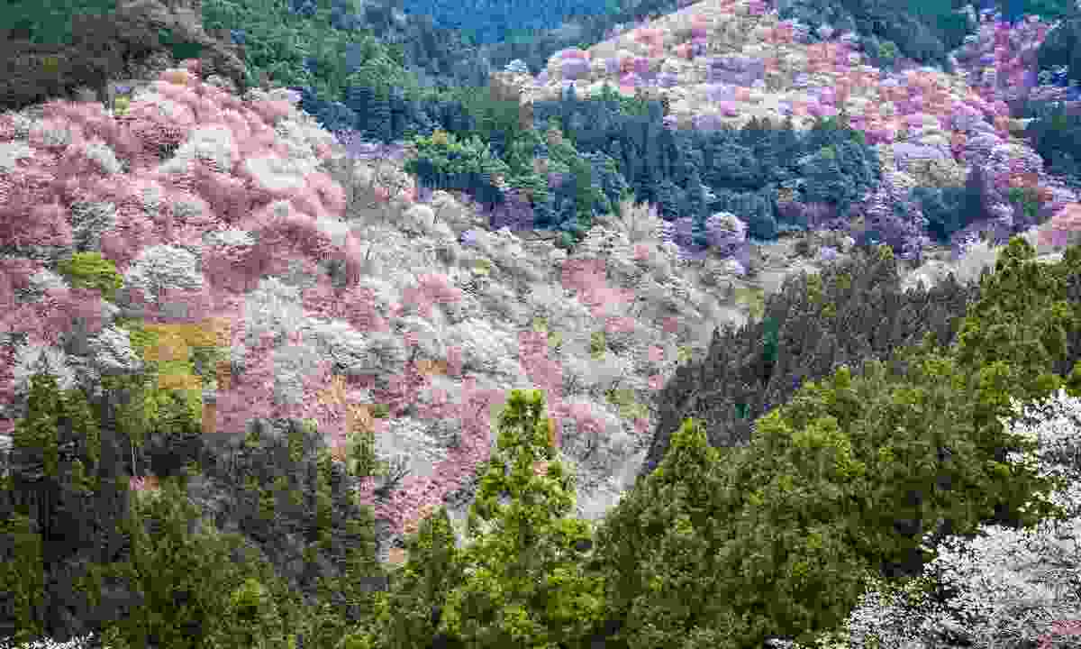 The view of Mount Yoshino in Spring (Shutterstock)