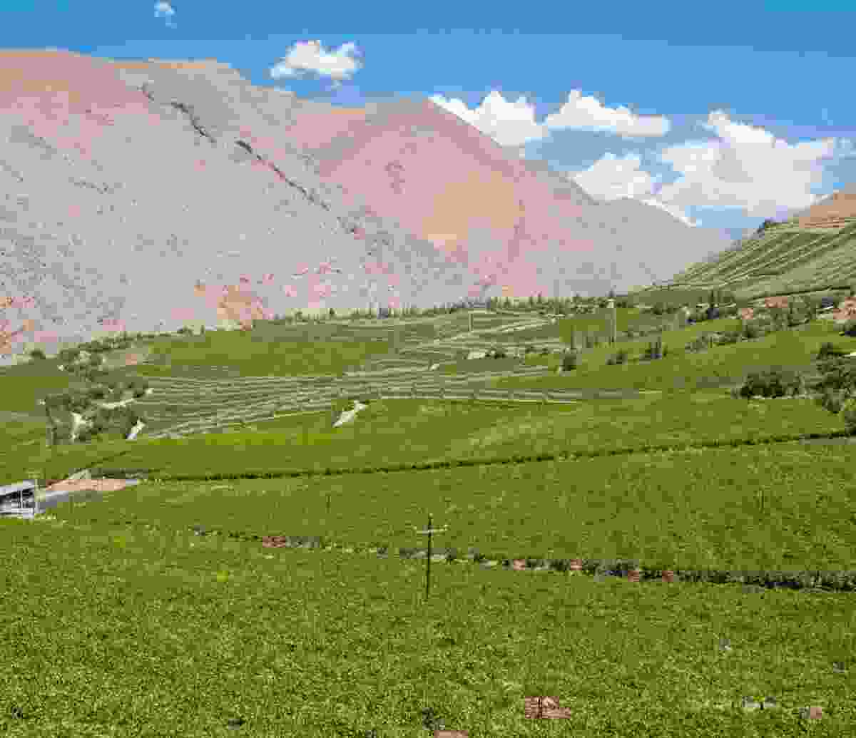 Vineyards in Chile's Elqui Valley (Shutterstock)