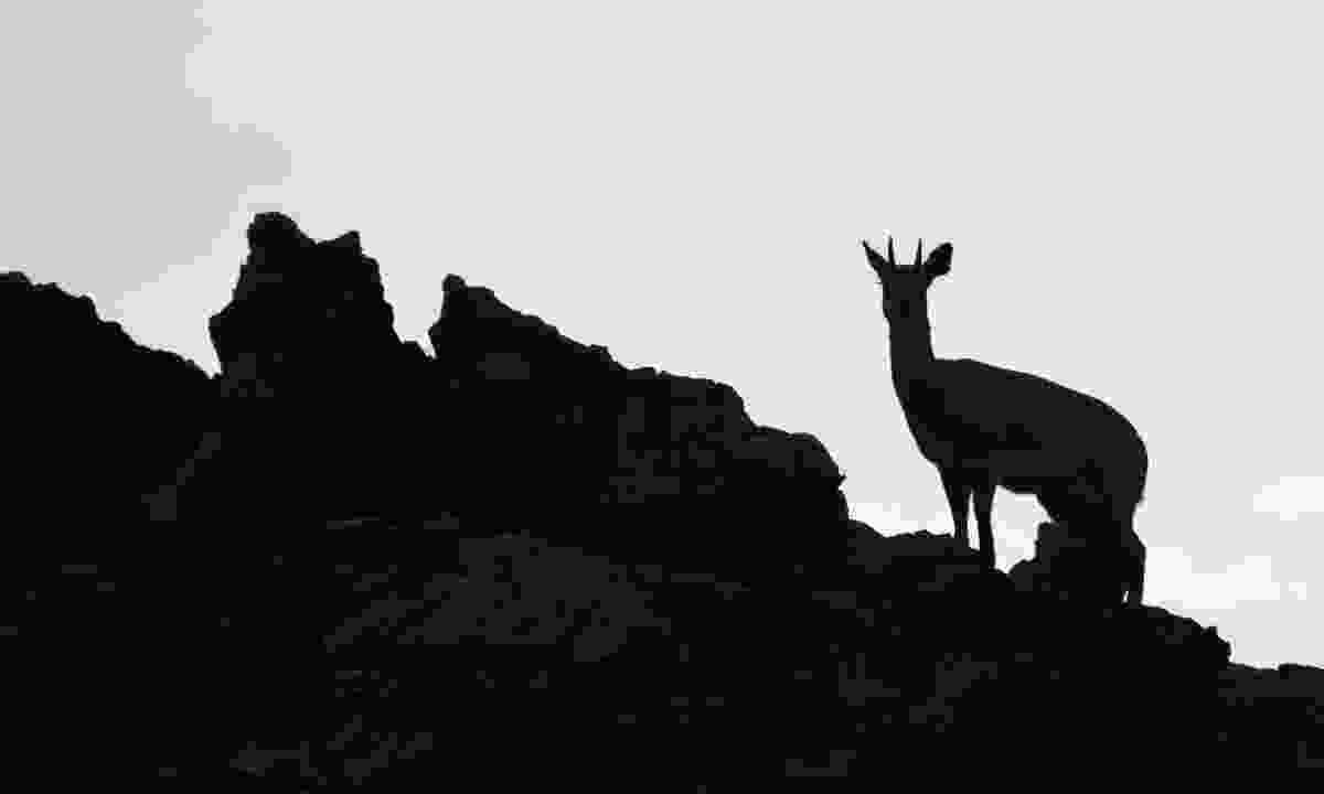 Silhouette at dusk (Fred Barrington)