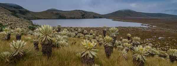 Angel's Tundra, Ecuador (Shutterstock)