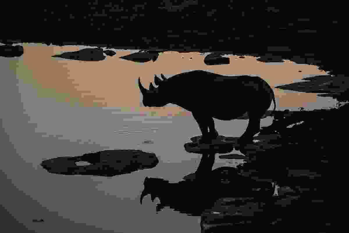 Black rhino in Namibia (Anja Denker)