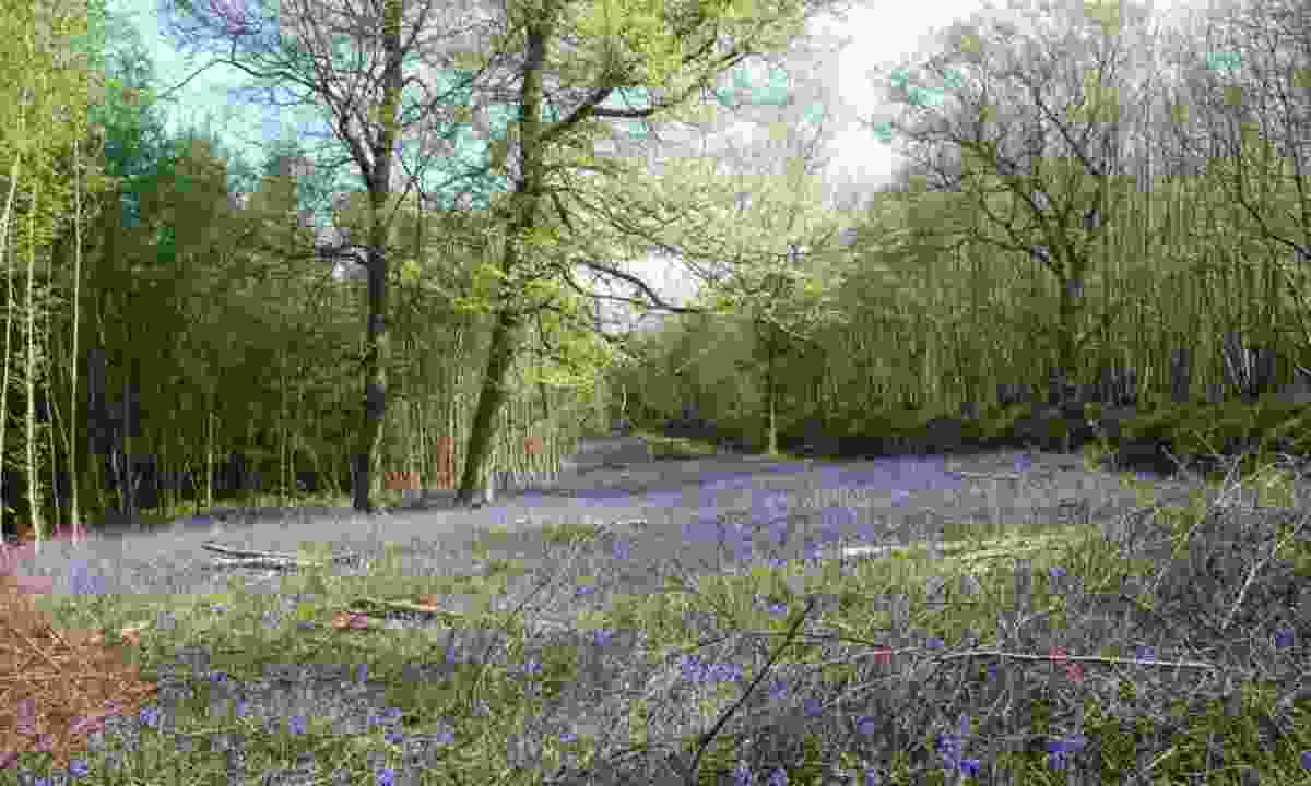 Brede High Woods (Woodland Trust)