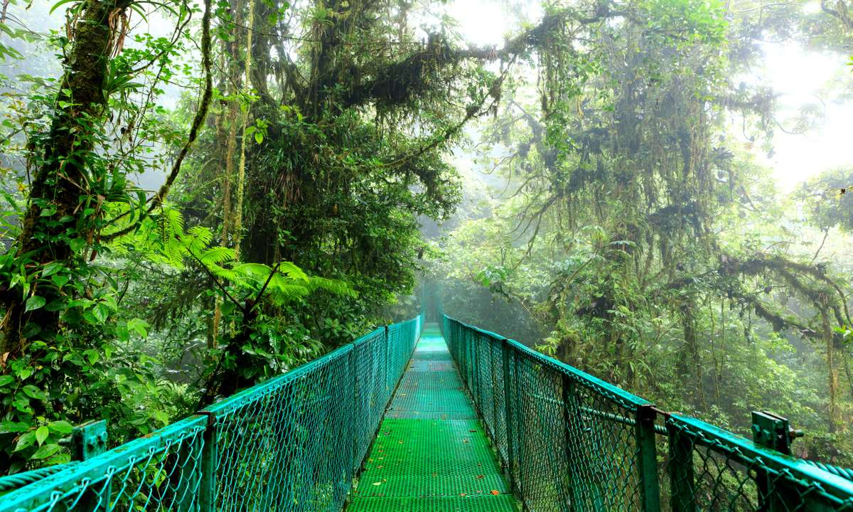 Suspension bridge in Monteverde Cloud Forest (Dreamstime)