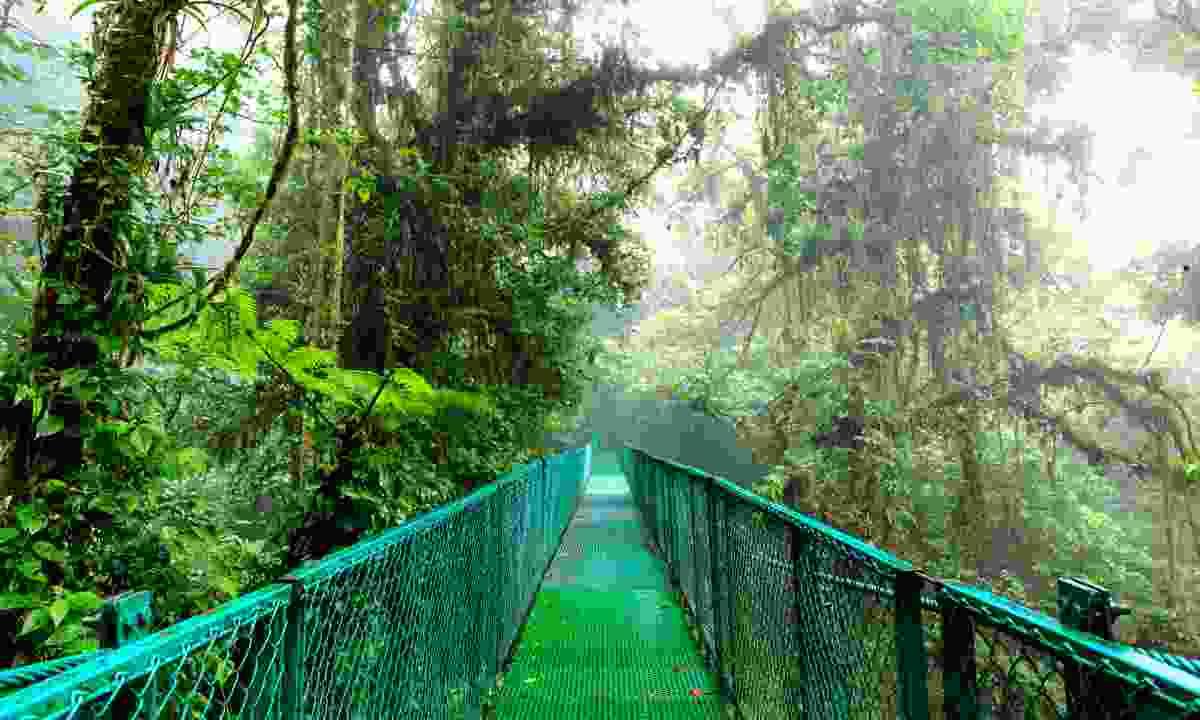 Suspension bridge in Monteverde Cloud Forest (Dreamstime)