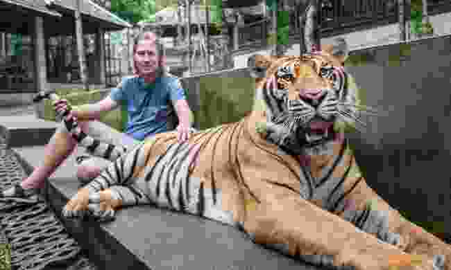 Tourist with tiger in Thailand (Shutterstock)