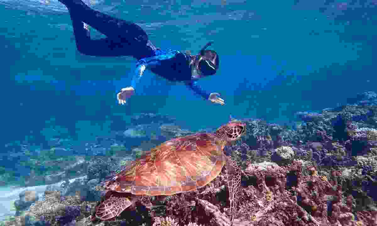 Snorkelling with a turtle at Ningaloo reef (Shutterstock)