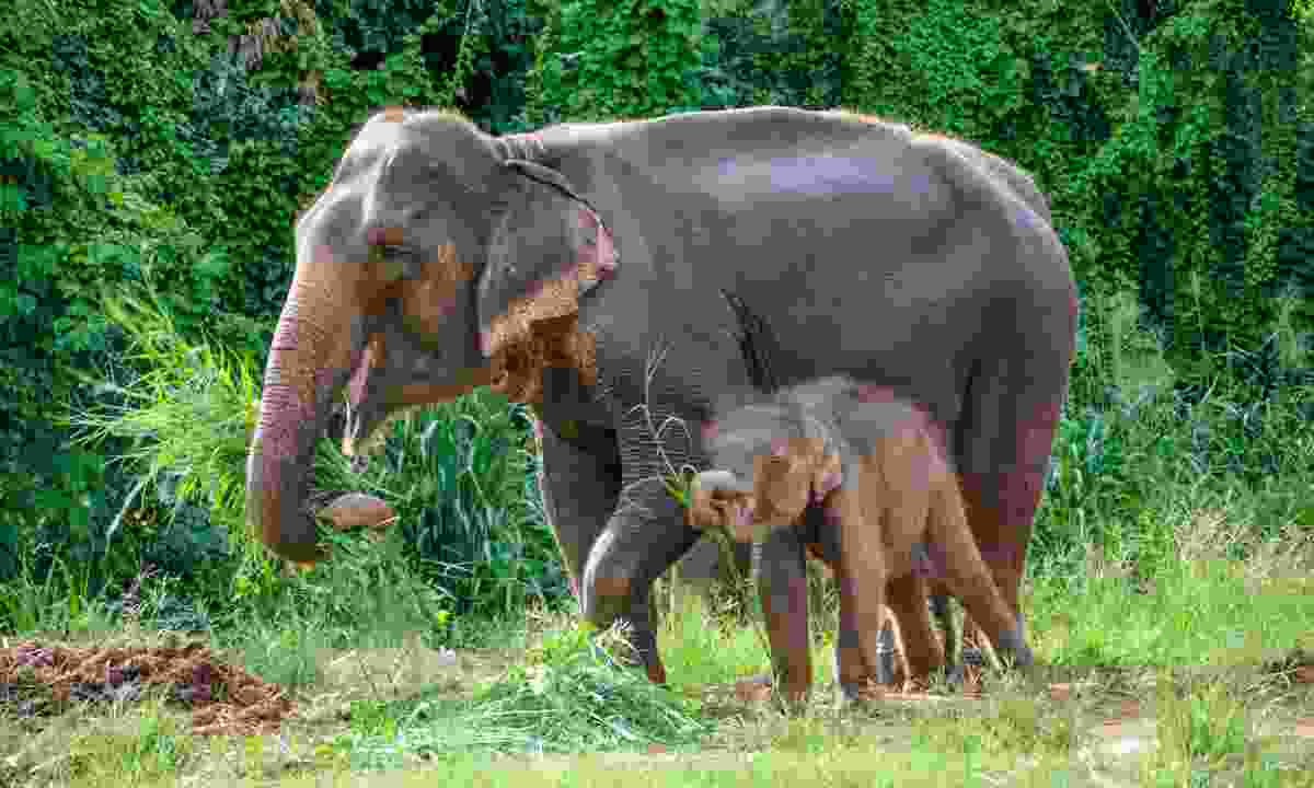 Mother and baby elephant in Khao Yai National Park (Dreamstime)
