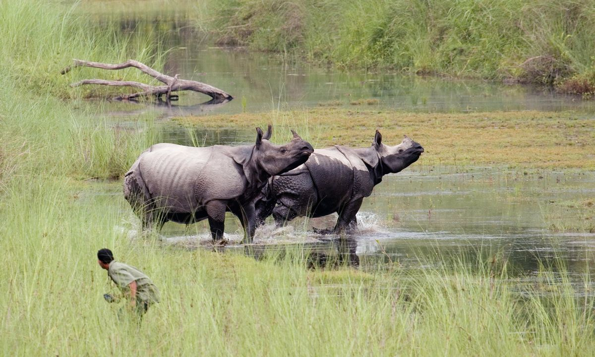 The 6 best places to see rhinos in the wild | Wanderlust
