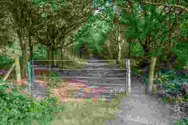 Hainault Forest Country Park (Shutterstock)