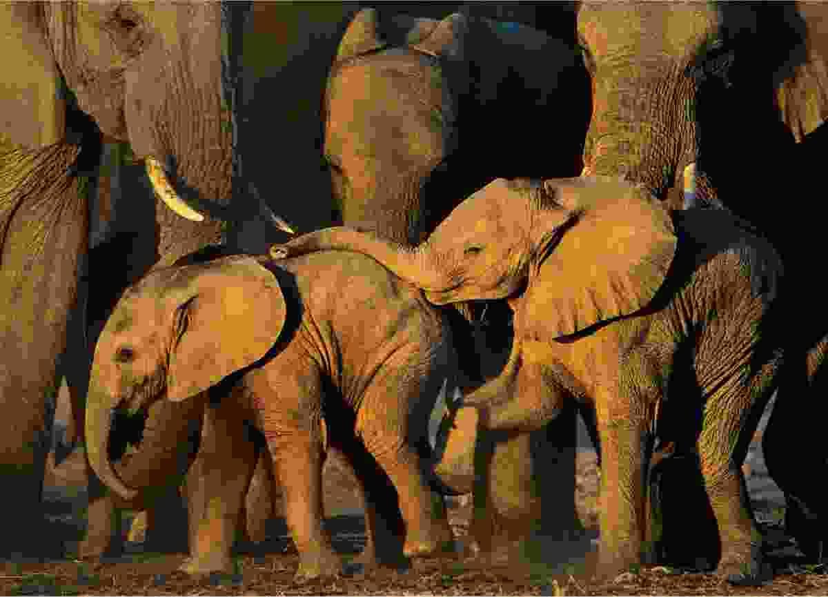 (Todd Gustafson/Remembering Elephants)