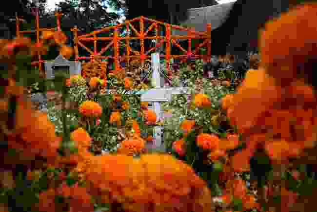 Marigolds on a grave, Mexico (Shutterstock)