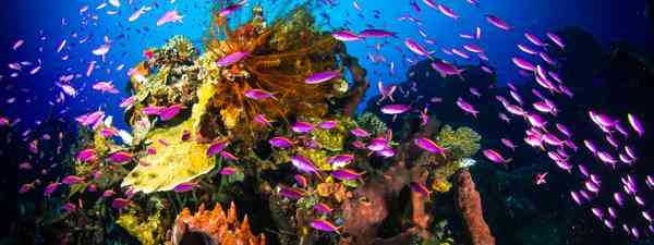 Diving in the Philippines (Shutterstock)