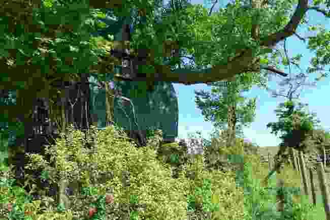 Tree Sparrow House, Cornwall (Tree Sparrow House)