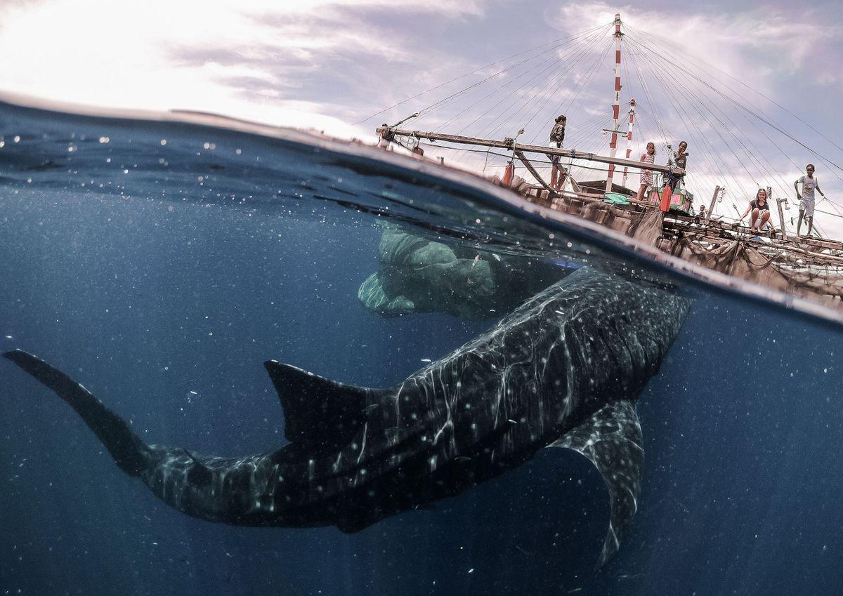Whale shark encounter, Teluk Cenderawasih National Park, West Papua, Indonesia (Marco Zaffignani)