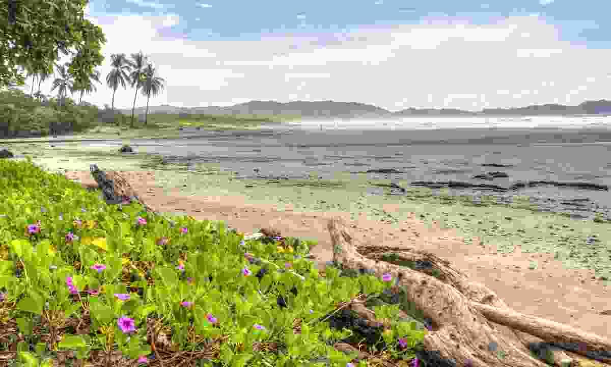 Guiones Beach, Costa Rica (Shutterstock)