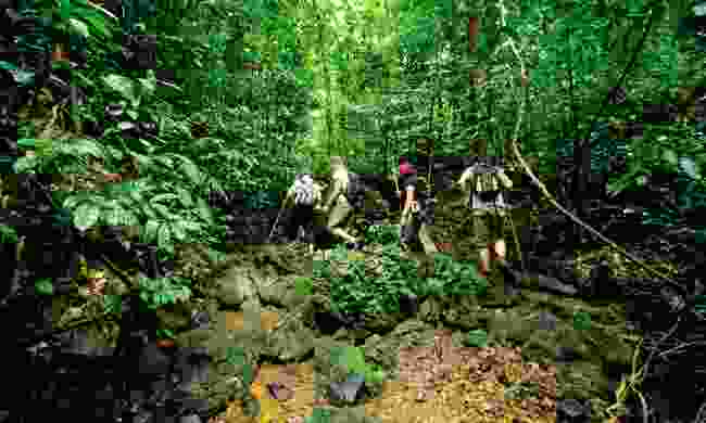 Jungle trek (Sovereign Luxury Travel)