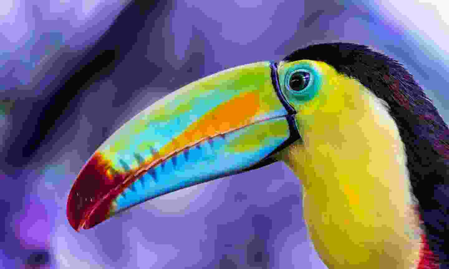 See the colourful birds of Costa Rica (Newmarket Holidays)