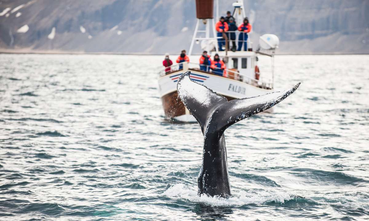 Whale watching in Iceland (Shutterstock.com)