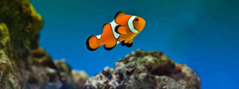 Finding Nemo (Anita Ritenour)