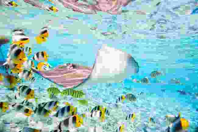 Snorkelling in Bora Bora (Dreamstime)
