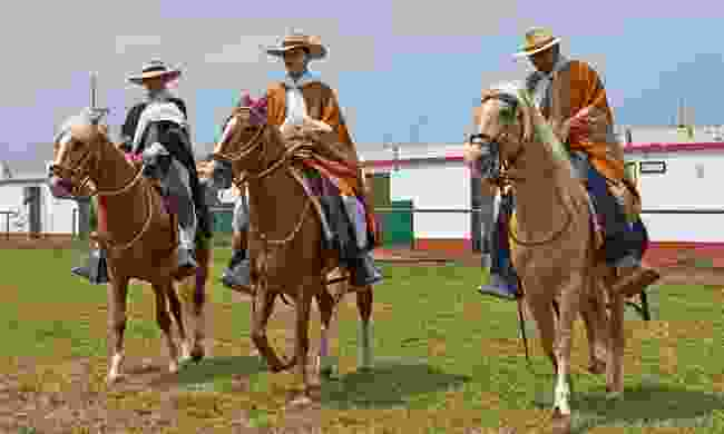 A parade of Paso horses at Trujilo's Spring Festival (Dreamstime)