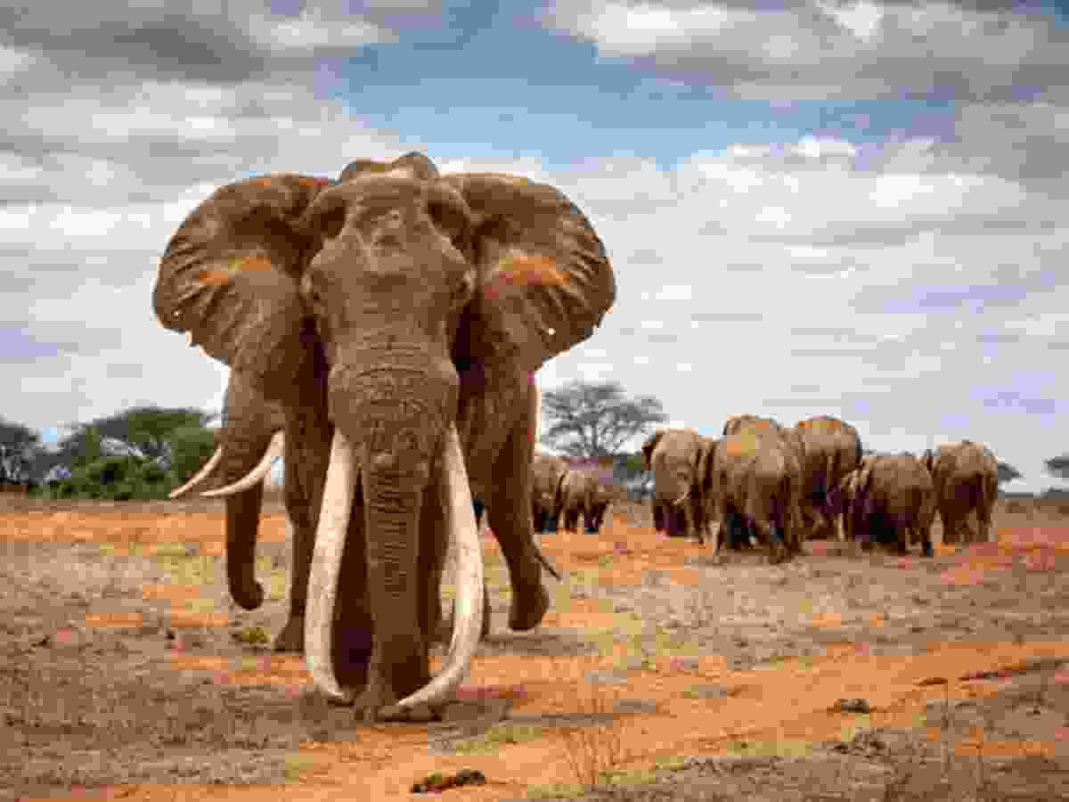(Johan Marais/Remembering Elephants)