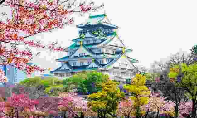 Osaka castle and cherry blossom trees (Ffestiniog Travel)