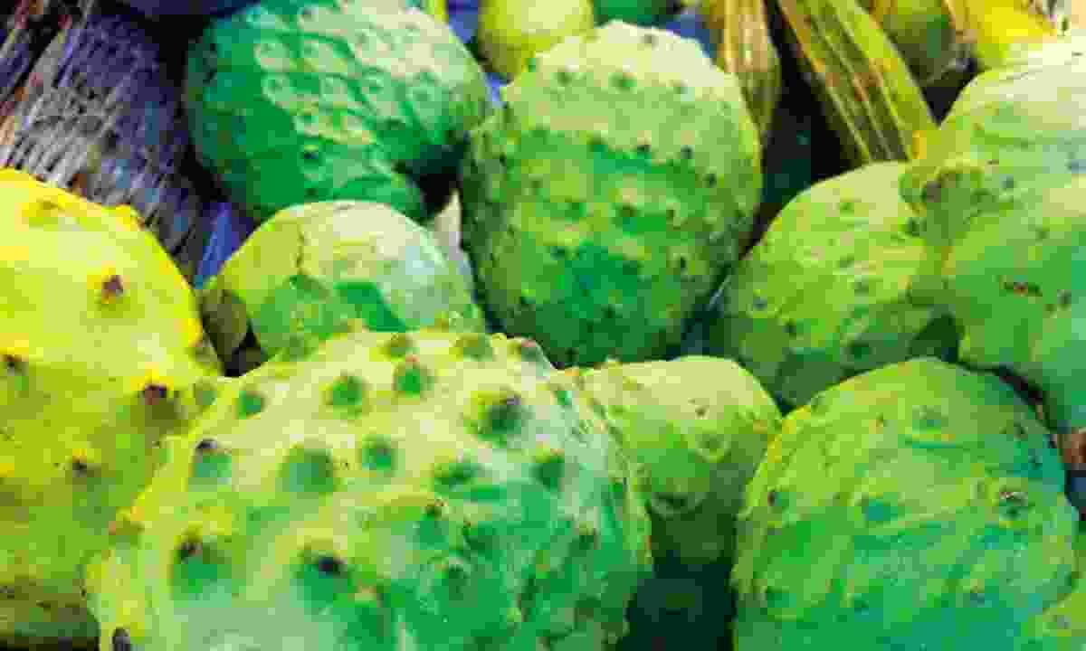 Aguaje fruit (Journey Latin America)