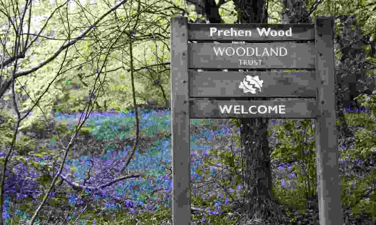 Prehen Wood (Simon Brown)