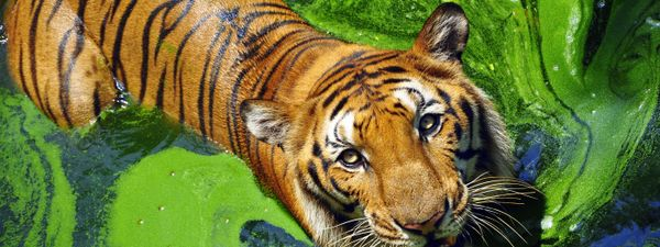 The best wildlife reserves for tiger watching in India
