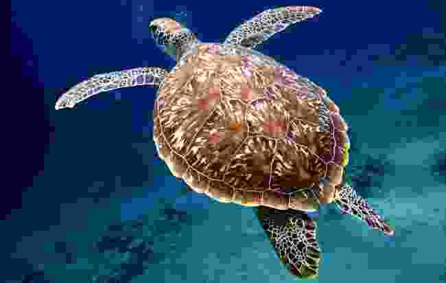 Snorkel with turtles (Shutterstock)