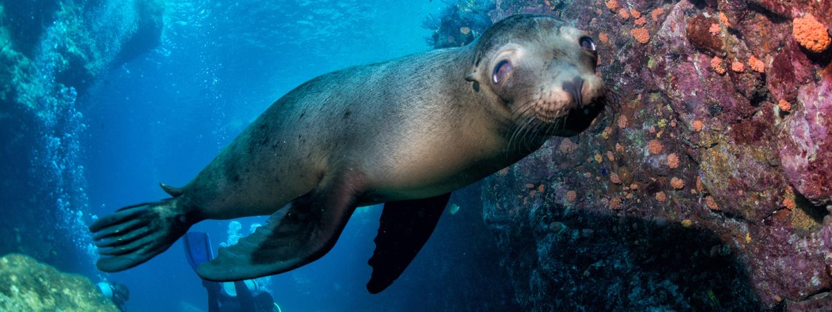 Natural selection: 7 wonders of the Galápagos Islands