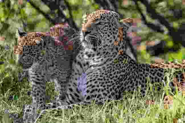 (Animal Planet/Jonathan and Angela Scott)