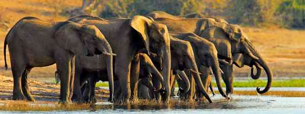 Elephants at a Chobe National Park watering hole (Shutterstock)