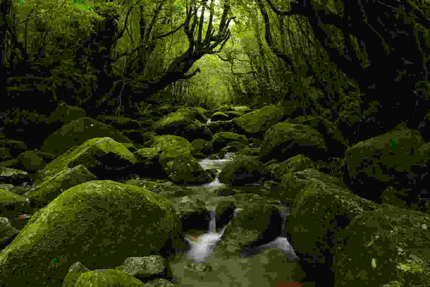 The ancient mossy forests of Yakushima (Shutterstock)