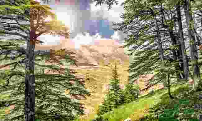 The Cedars of Lebanon (Shutterstock)