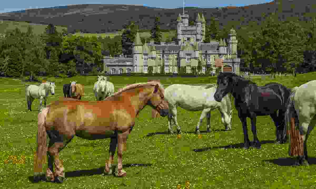 Horses graze in front of Balmoral Castle (Shutterstock)