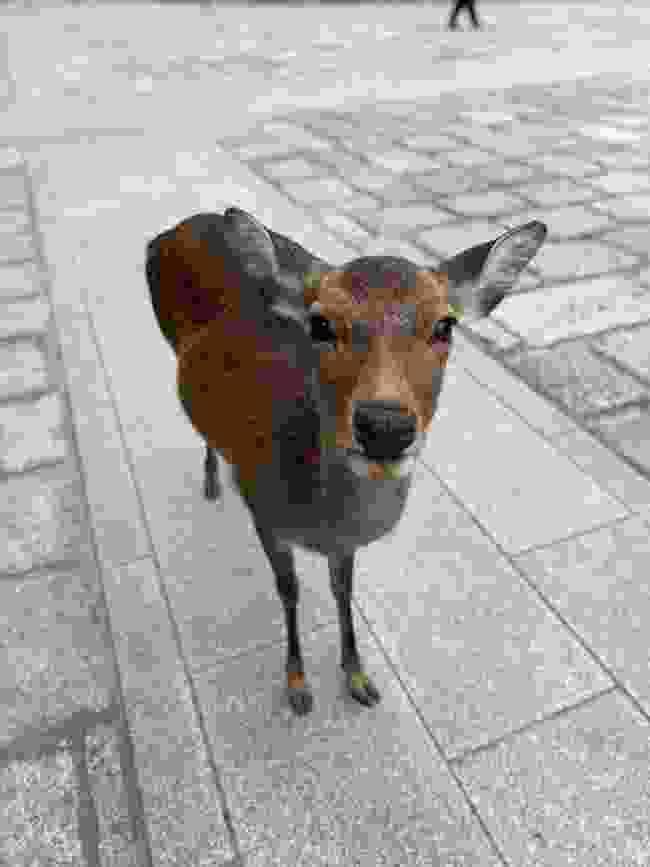 Nara's friendliest local (Lucy Bairstow)