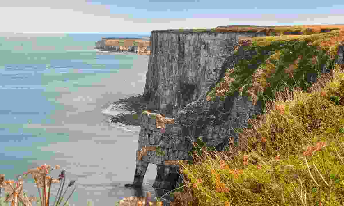 Bempton cliffs (Dreamstime)
