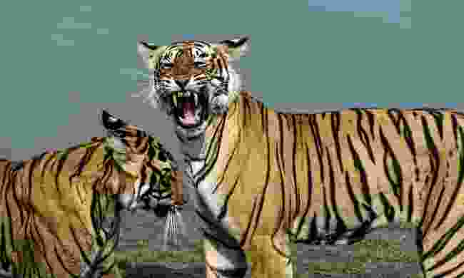 Ranthambore National Park is famous for tigers, Rajasthan, India (Dreamstime)