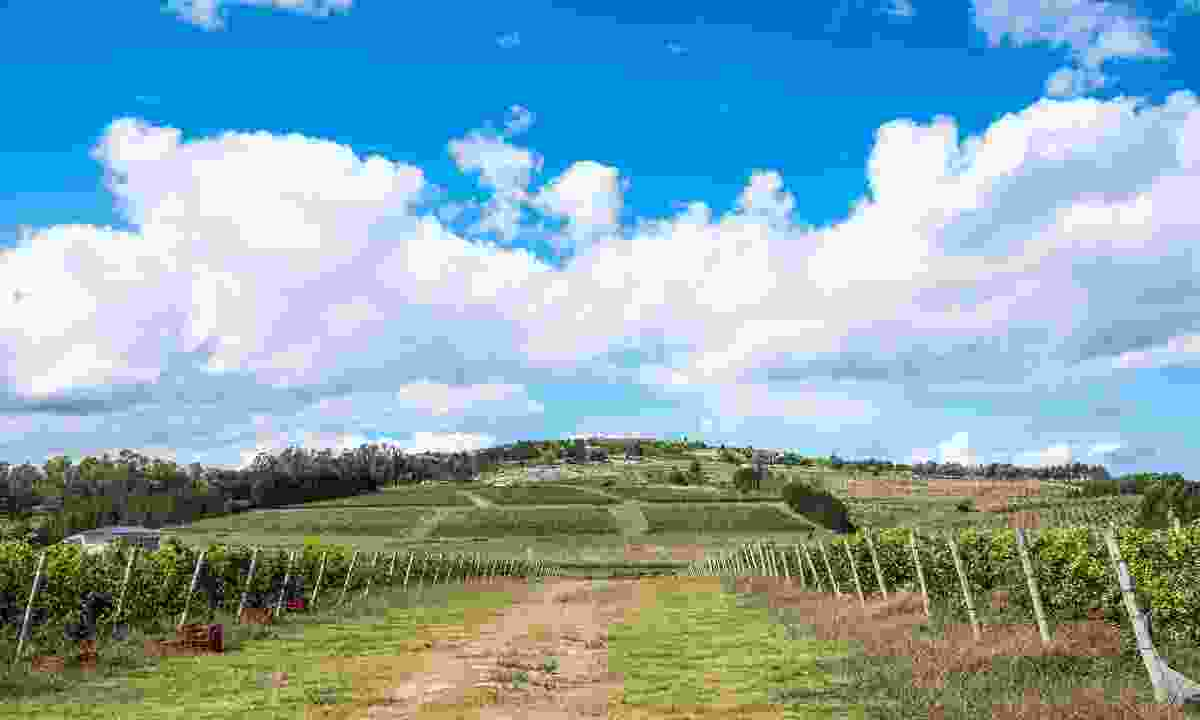 View over a stunning vineyard (Dreamstime)