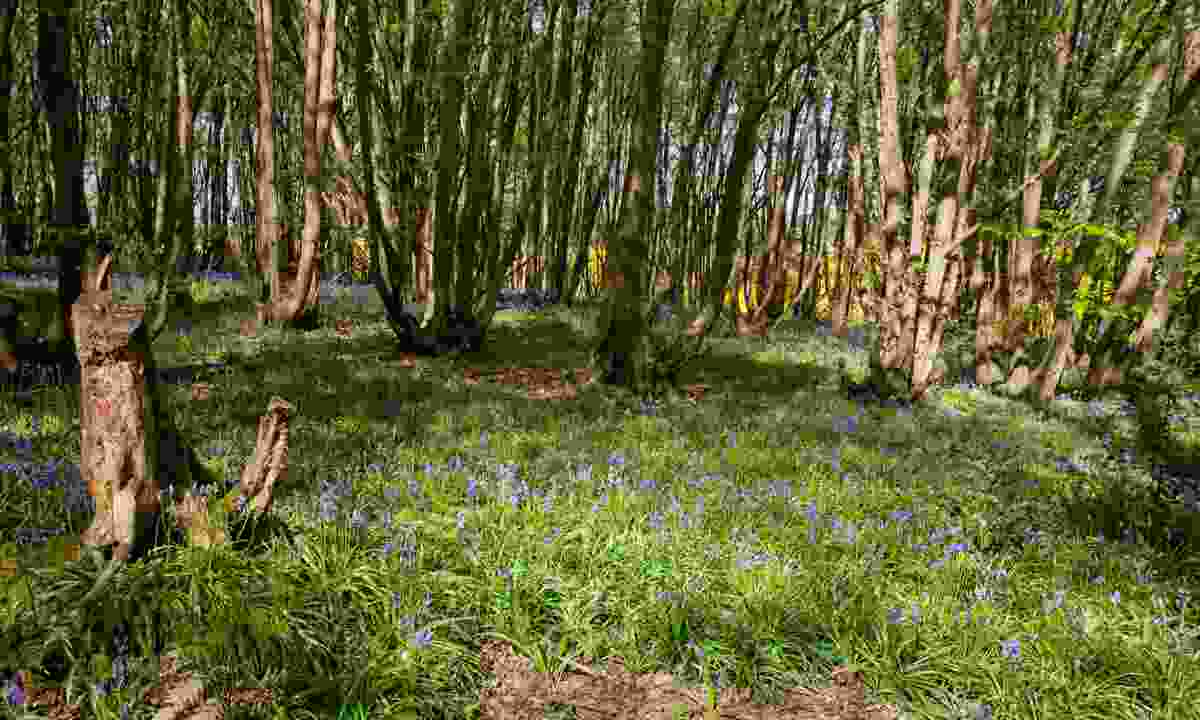 Heartwood Forest (Judith Parry)