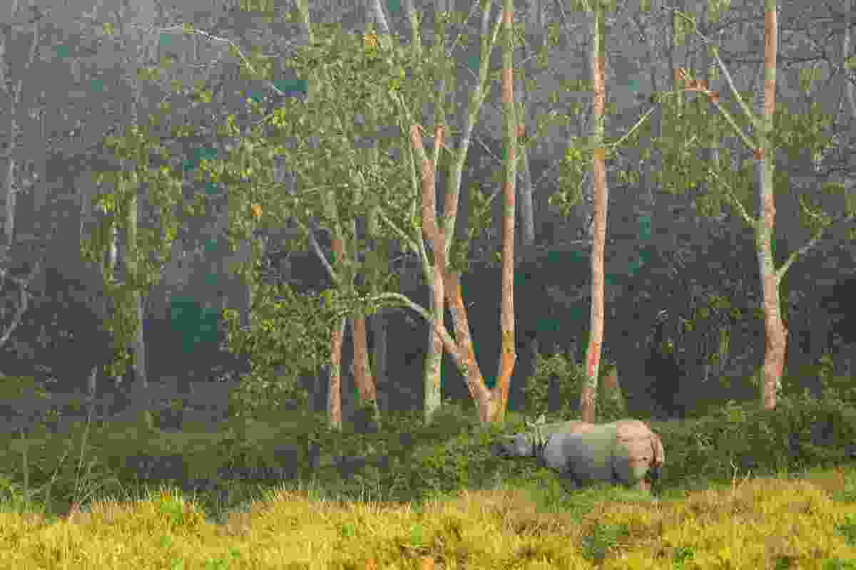 Rhino in Chitwan NP (Dreamstime)
