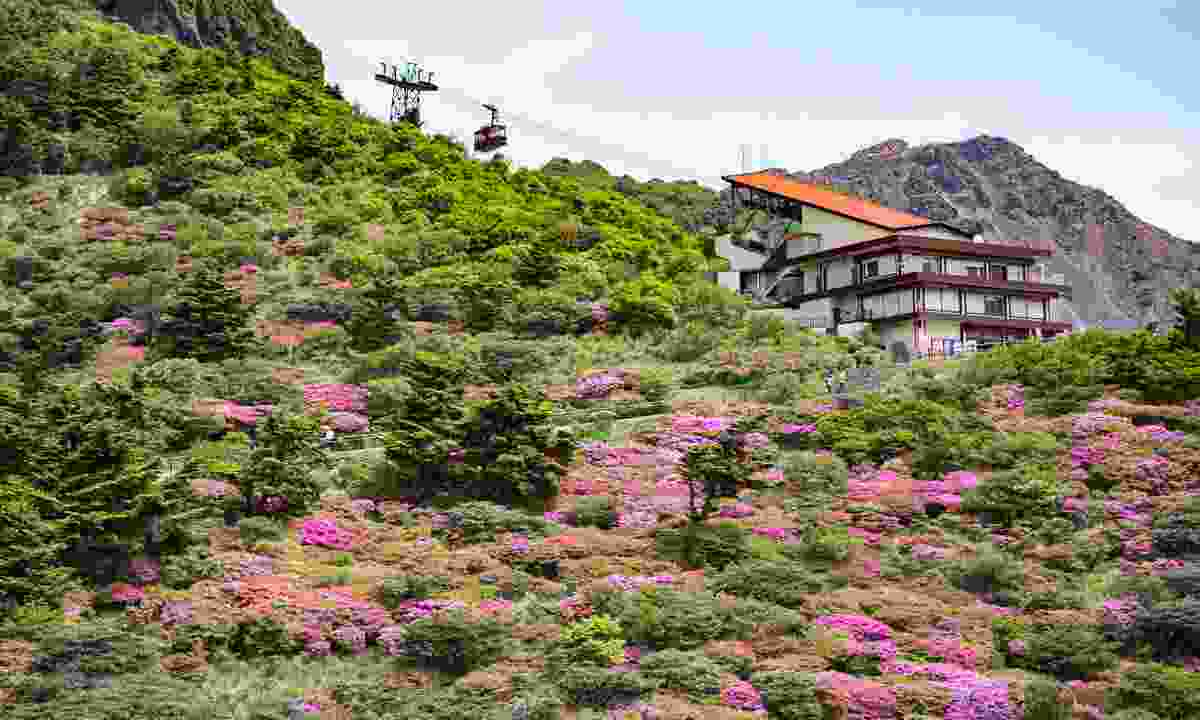 Cherry blossom in Unzen (Shutterstock)