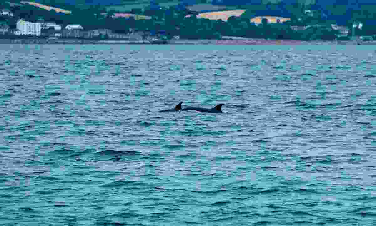 dolphins can be spotted off the coast of Penzance (Shutterstock)